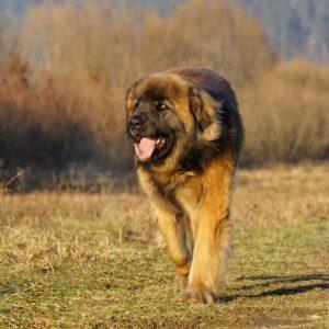 dog-mammal2